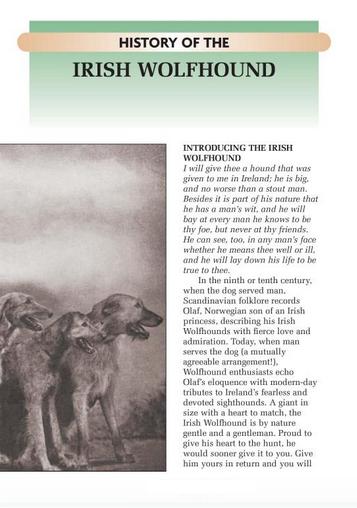 Irish Wolfhound : Kennel Club Books : Alice Kane : New Hardcover @ZB