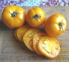 1/8 Oz Seeds of Valencia Tomato - $48.51
