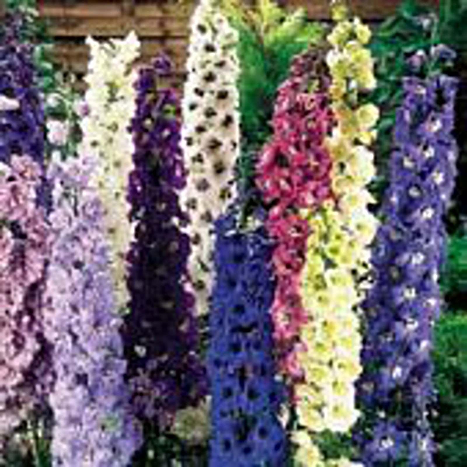 Delphinium Flowers (Pacific Giants Mixed) Seeds - $3.49