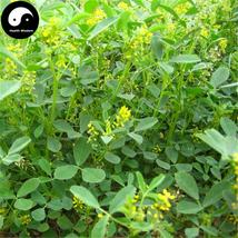 Buy Melilotus Officinalis Seeds 1000pcs Plant Forage Grass Melilotus Grass - $15.99