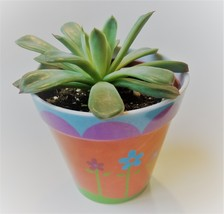"Echeveria Succulent in Flower Design Pot, Live Plant, 4"" Colorful Planter - £10.67 GBP"