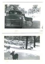 Wild Deer at Car Window Photographs 1940's - $13.86