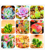 100pcs/Bag 99 kinds different Succulents Seeds Lithops seeds Pseudotrunc... - $4.99