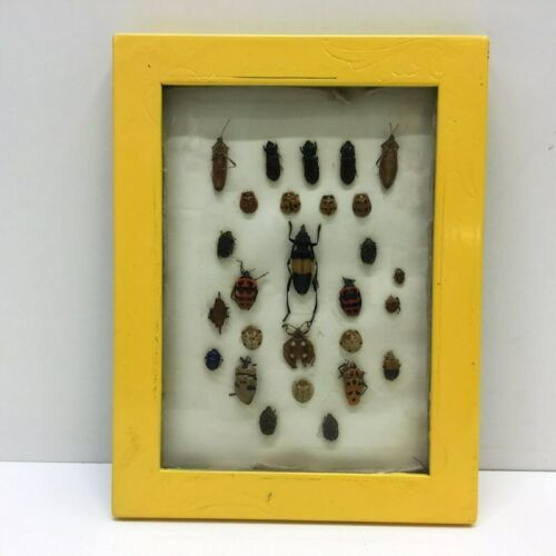 """Insect Entomology Lot Collection 27pc Specimen Beetle 8.5""""x6.5"""" Frame"""