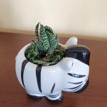 Zebra Planter with Zebra Plant Succulent, Succulent Gift, Animal Planter Pot image 6