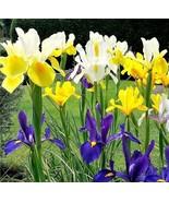20 MIXED SIBERIAN IRIS Sibirica Iris Bicolor Blue Red White Purple Flowe... - $14.00