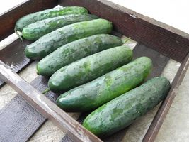 SHIP From US, 100 Seeds Turbo F1 Cucumber Seeds, DIY Healthy Vegetable AM - $48.99