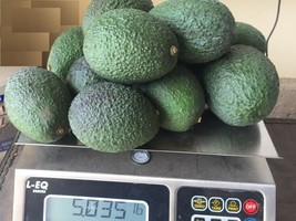 12 Fresh Hass Avocados, Naturally Grown in Fallbrook, 6.5 oz each, 5 lbs... - $36.12