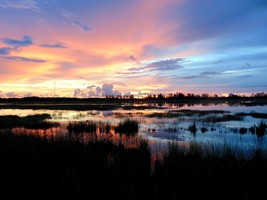 Sunset in the Everglades   Photo   Color Print   (Free Shipping) - $23.33
