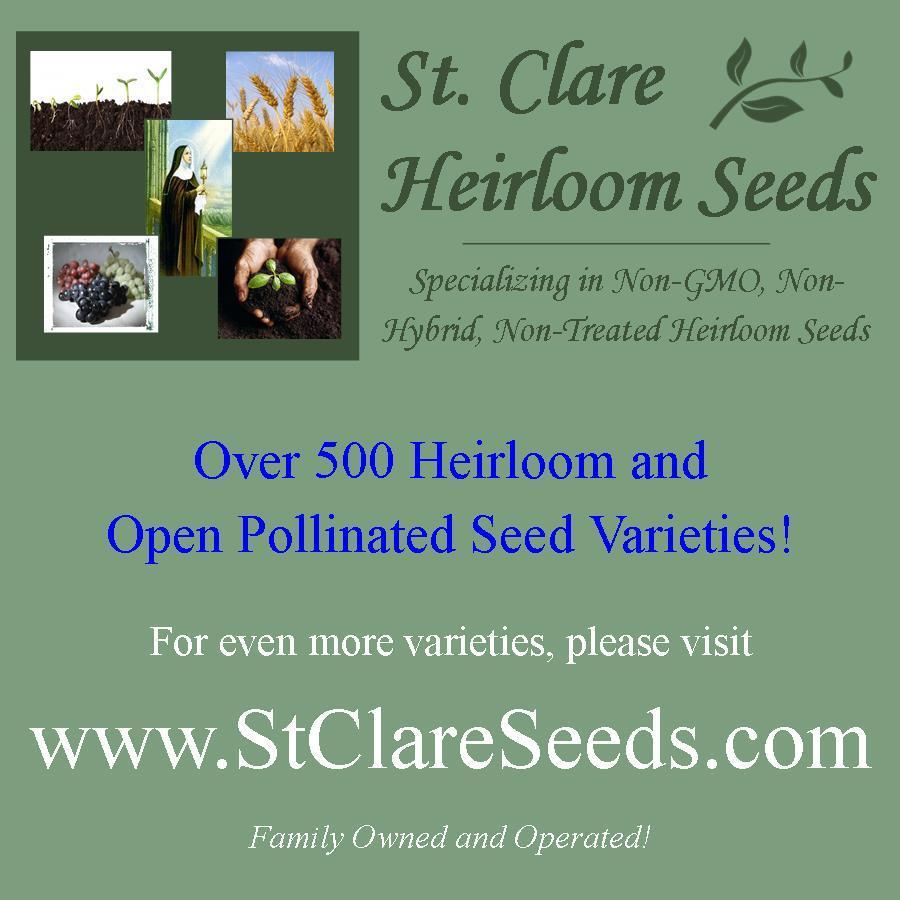 Flower - Morning Glory - Crimson Rambler - Non-Hybrid - St. Clare Heirloom Seeds