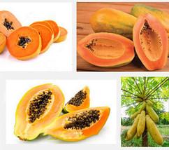 Fruit papaya seeds 30 pcs Yellow Gold Papaya Heirloom Seeds Delicious Fruit - $4.76