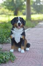 Dog-Bernese Mountain Dog-Garden Statue,  Home Decor, Animal Sculpture - $347.58