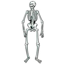 Jointed Skeleton Party Accessory 1 count 1/Pkg - $11.68