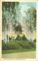 Birches, Forest Park, Springfield, Mass 1921 used Postcard  - $5.35