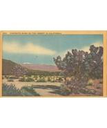 Creosote Bush on the Desert in California 1942 used linen Postcard  - $3.99