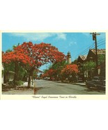 Flame, Royal Poinciana tree in Florida 1950s unused Postcard  - $6.77