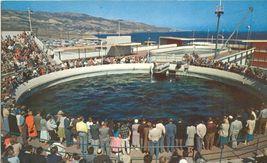 Marineland of the Pacific unused Postcard - $5.50