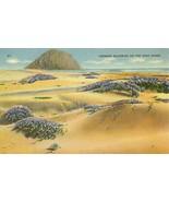 Verbena Blooming on the Sand Dunes, California unused linen Postcard  - $4.25