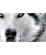 WOLF SPIRIT THOR EXTREME POWERFUL SPELL FOR COMPLETE LIFE TRANSFORMATION - $150.00