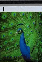 200 Bags 100 10x13 Blue Peacock, 100 10x13 Peacock Feathers Designer Pol... - $18.95