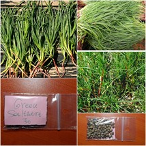 Greek Original Saltwort ''Salsola Soda'' ~70 Top Quality Seeds - Healthy... - $15.48