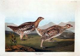 Audubon Sharp Tailed Grouse Bird Art Print 7 in x 10 in, Matted to 11 in x 14 in - $9.99