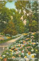Path of Rhododendrons, Golden gate park, San Francisco 1928 used Postcard  - $3.99