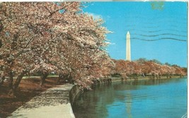 Washington DC at Cherry Blossom time- 1960 used Postcard  - $3.99