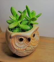 """Golden Sedum Succulent in Ceramic Owl Planter, Live Plant, 2.5"""" Animal Pot image 4"""