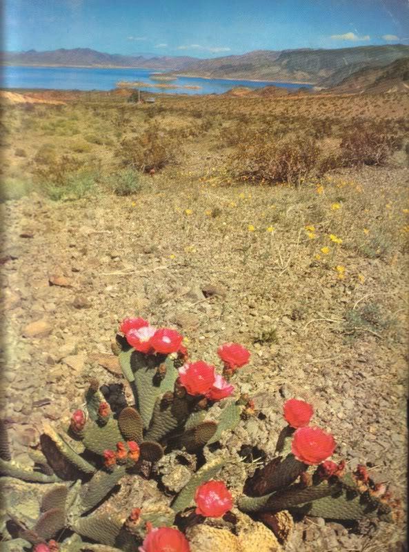 ARIZONA HIGHWAYS MAGAZINE FULL YEAR 1959 RODEO BEAUTY ART PHOTO COWBOY WEST image 3