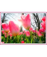 Tulips a glow - $39.99 - $64.99