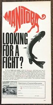 1967 Manitoba Canada Tourism Print Ad Looking For a Fight? Fish Manitoba - $10.70