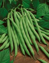 50 Blue Lake #274 Bush Bean 2019 (All Non-Gmo Heirloom Vegetable Seeds!) - $4.32