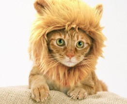 Prymal Lion Mane Dog Cat Costume - €17,78 EUR