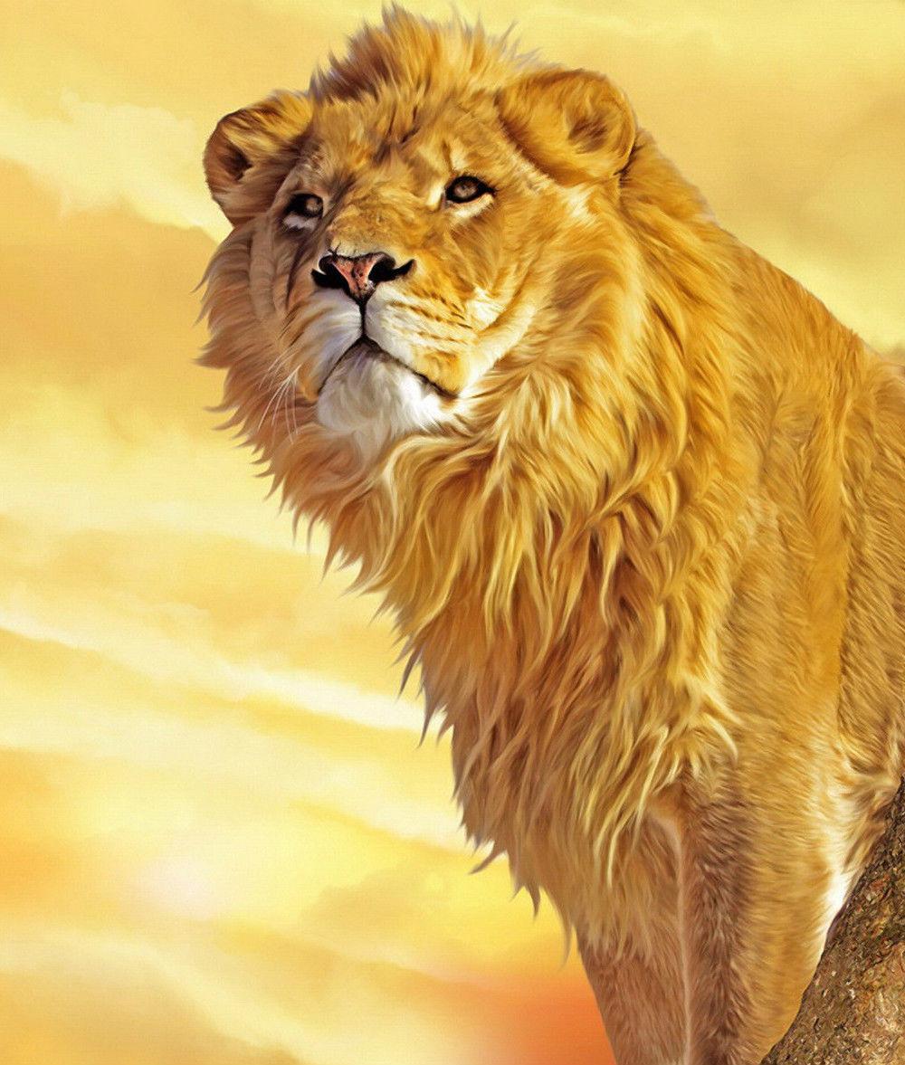 Lion  8 x10 Color Photo