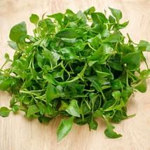 Garden Cress - 3 oz. - Organic - Lepidium sativum Halim Aliv  حب الرشاد image 2