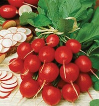 Cherry Bell Radish Seed - Garden Radishes Root Vegetable Seeds (¼oz to 4oz) - $4.45+
