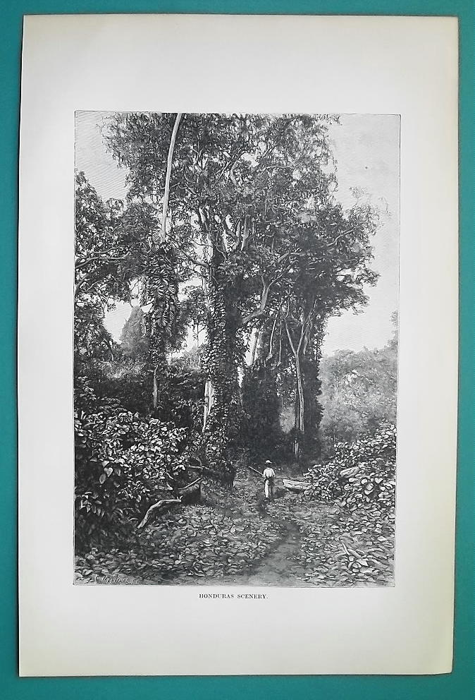 HONDURAS Natural Scenery Flora Trees - 1891 Antique Print Engraving