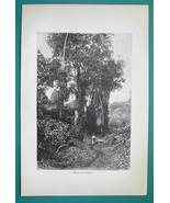 HONDURAS Natural Scenery Flora Trees - 1891 Antique Print Engraving - $20.25