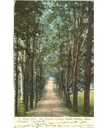 A Shady Walk, Mt. Holyoke College, South Hadley, Mass 1906 used Postcard  - $4.99