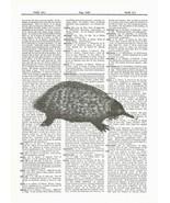 Anteater Wild Animal Mammal Dictionary Print Wildlife animal056 - $10.99