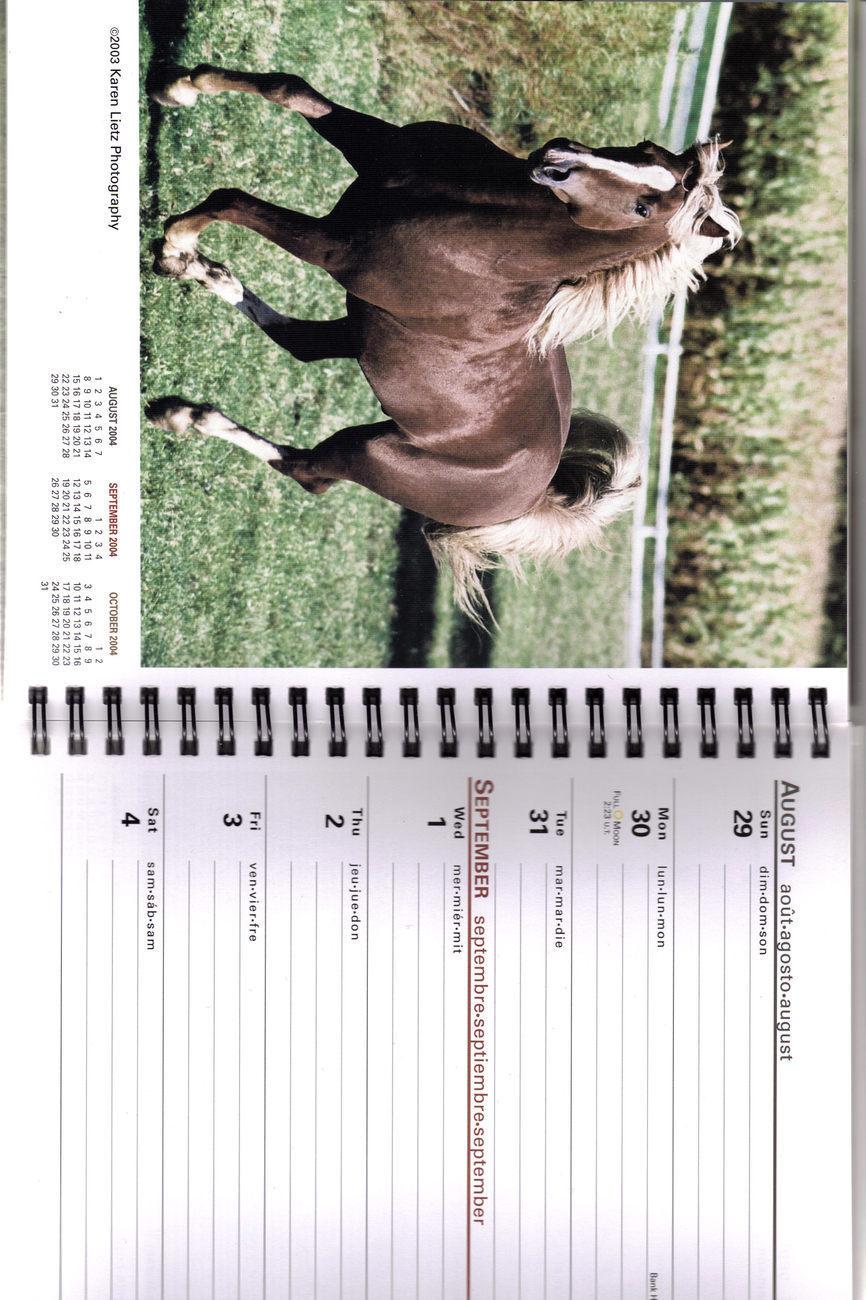 2004 HORSES Weekly CALENDAR