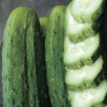Organic National Pickling Cucumber - $1.97