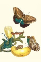 Banana Plant with Teucer Giant Owl Butterfly and a Rainbow whiptail Lizard by Ma - $19.99+