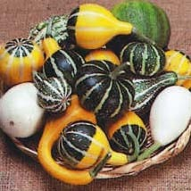 Small Fancy mix Gourd Seeds Fresh Seed - Gourd Seed - Outdoor Living - Gardening - $42.00+