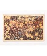 Vintage MidCentury Florida Grapefruit Linen Postcard -Mailed Palm Beach,... - $3.50