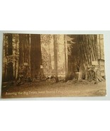 VINTAGE POSTCARD AMONG THE BIG TREES  SANTA CRUZ CALIFORNIA F56 - $11.63