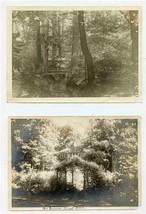 Three Women in the Woods Photos Log Bridge Summer Lunch Room  - $27.72