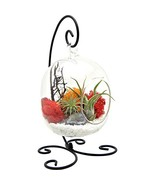 """Bliss Gardens Air Plant Terrarium Kit with 6"""" Oval Glass with Geode Crys... - $34.18"""