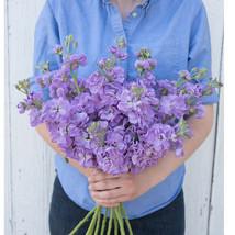 Katz Lavender Blue Stock Seeds Edible Flower Seeds - $8.99